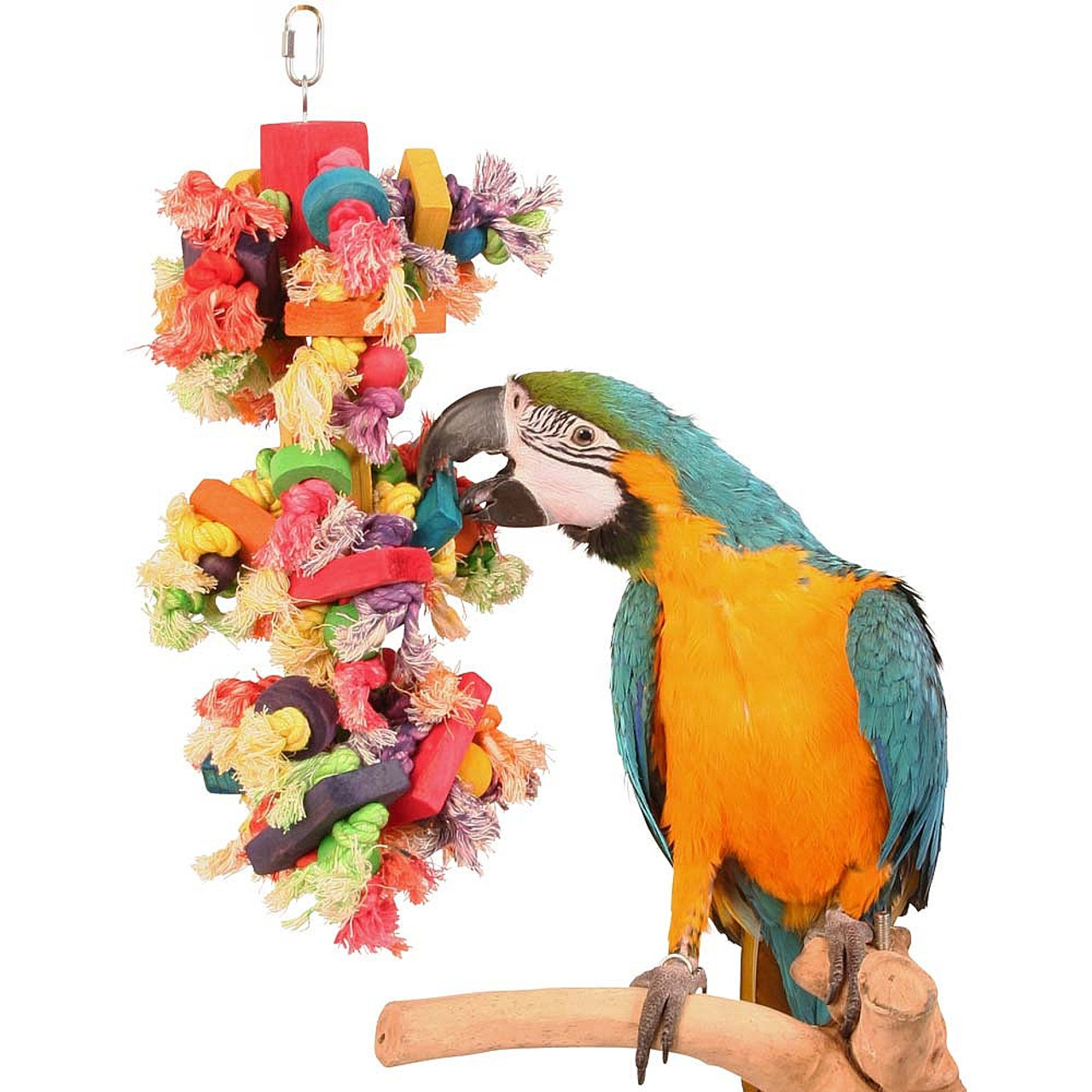 Best Parrot Bedding