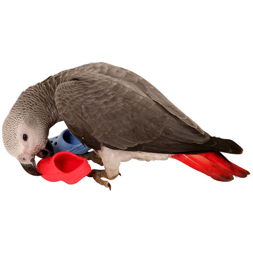 Pair of Flip Flops Parrot Toy