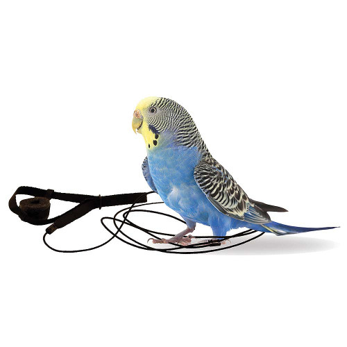 The Aviator Parrot Harness - Mini