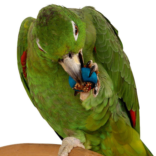 Six Rings-A-Treat - Tasty Parrot Toy and Treat
