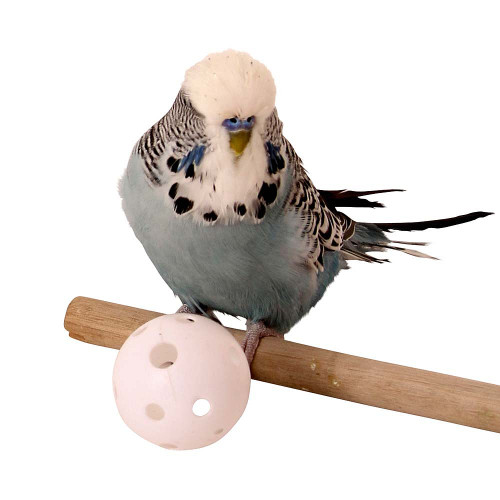 Plastic Wiffle Balls Parrot Toy - Pack of 6