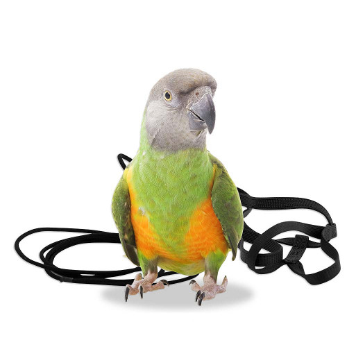 The Aviator Parrot Harness XSmall