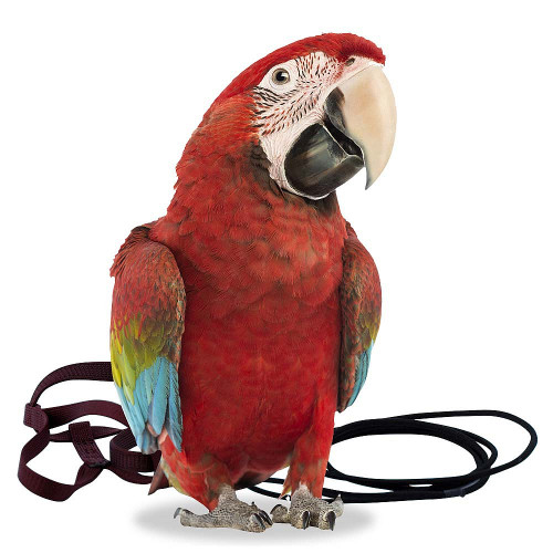The Aviator Parrot Harness XLarge