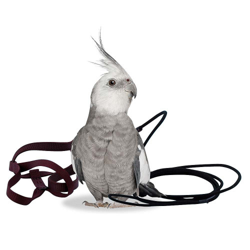 The Aviator Parrot Harness Petite
