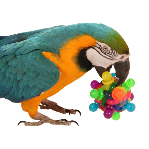 Small Toy Parrots : Buy birdie bangles small pack of from parrot essentials