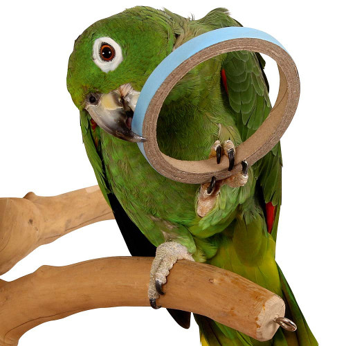 Birdie Bangles Foot Parrot Toy - Large - Pack of 6