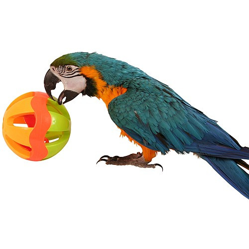 Jingle Ball Parrot Play Toy - Large
