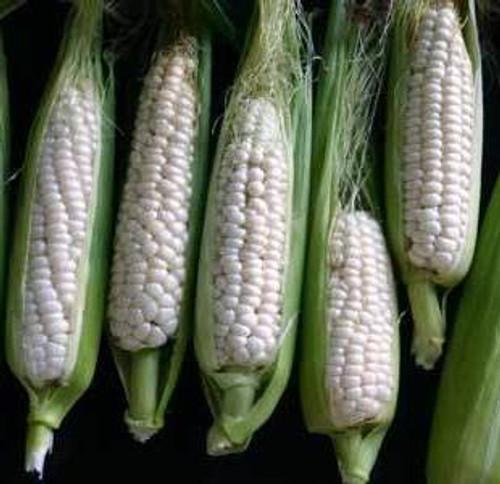 Corn, Luther Hill OG