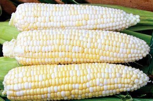 Corn, Who Gets Kissed OG