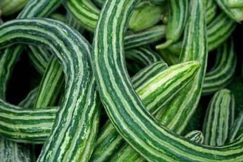 Cucumber, Armenian OG