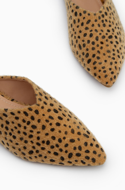 Oxford - Cheetah