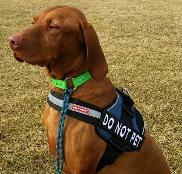 EZY Dog harness name tag.