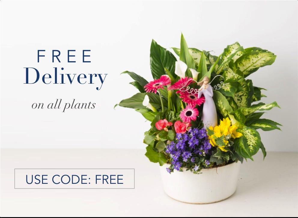 1-angies-floral-designs-shop-flower-79912-shop-el-paso-florist-79912.png