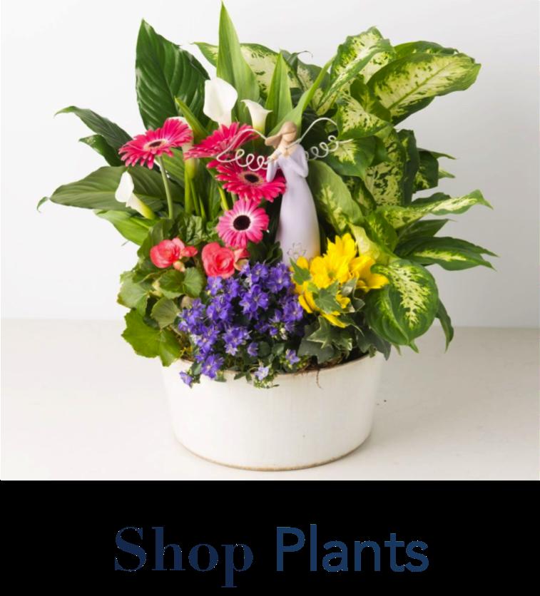 angies-floral-designs-plants-flowers-gifts-wholesale-flowers-chocolates-1-el-paso-weddings-el-paso-florist-flowershop-79912-angies-flower-el-paso-texas-flowershop-roses-wedding-events-.png