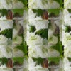 Skingrass - Animal Print Fabric By The Yard