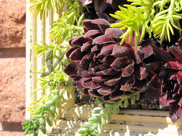 Succulent Plant Frame For Under 5 Youngs