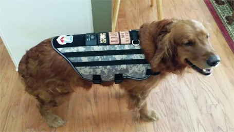 Molle Dog Harness Vest with Tear Away Pouches