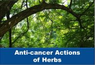 Anti-cancer Actions of Herbs