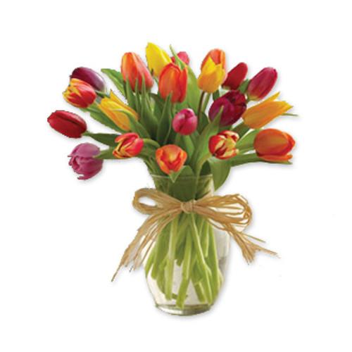 20 fresh cut tulips in a clear vase with a raffia ribbon.