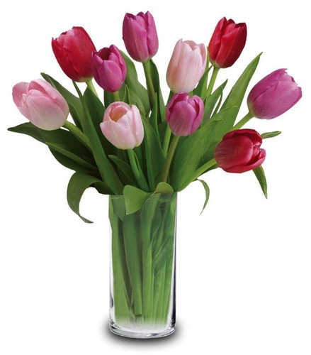 Luscious Tulips- 10 Tulips in a clear vase assorted seasonal colors
