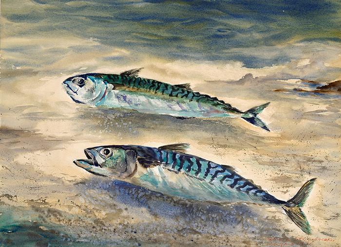Two Tinker Mackerel