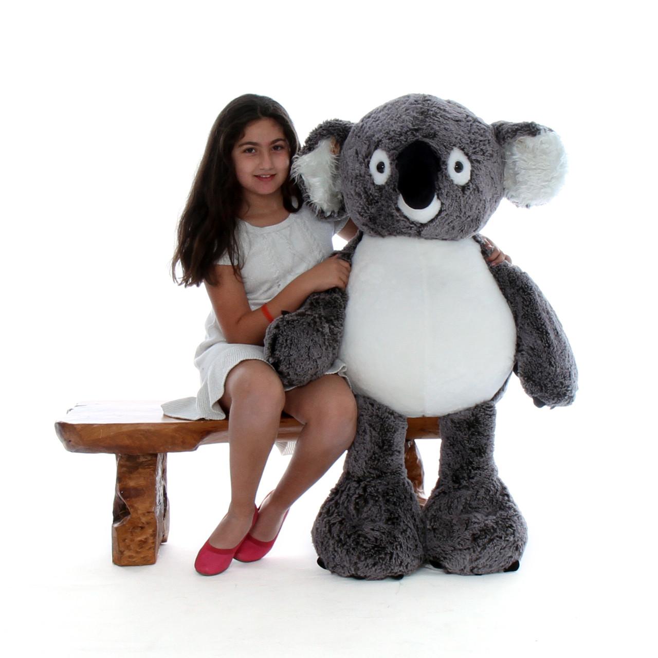 45in Quigley Koala