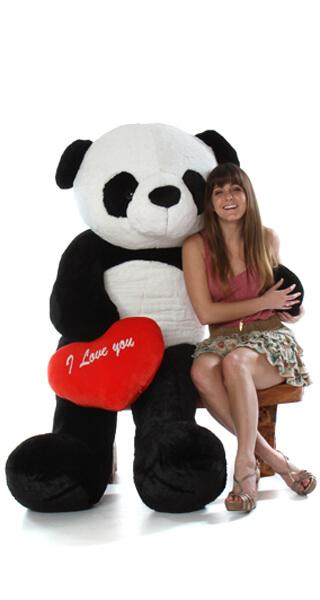 72-panda-live-1.jpg