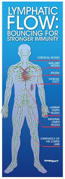 Infographic showing: Lymphatic Flow: Bouncing for Stronger Immunity above a human body diagramming the lymphatic flow and other locations related to the immune system