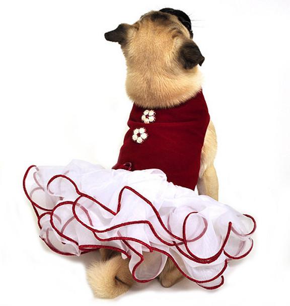 Red Velvet Christmas Dog Dress 2