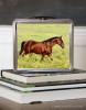 Bay Horse Equestrian Lunch Box
