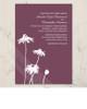 Spring Daisies Wedding Invitation (10 pk)