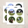 Gypsy Vanner Horse Round Stickers Pack