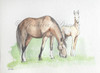 Spring Foals Collection