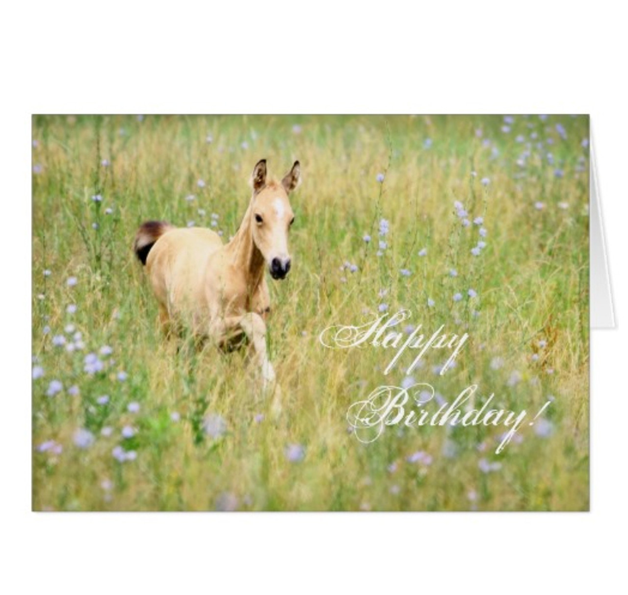 Sweet Young Horse Foal Birthday Card