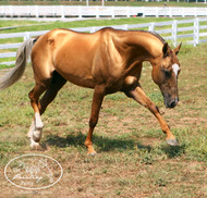 International Heritage Breeds Week - Spotlighting the Akhal-teke Horse