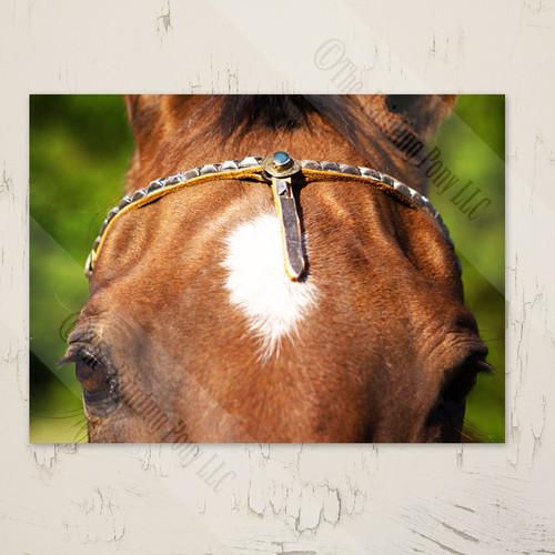 akhal-teke horse blank note cards