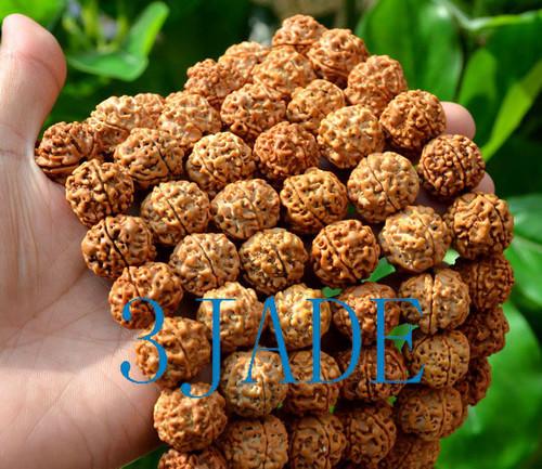 Rudraksha Bodhi Seed