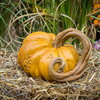 Autumn Pumpkin Vine