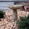 Rose Bird Bath
