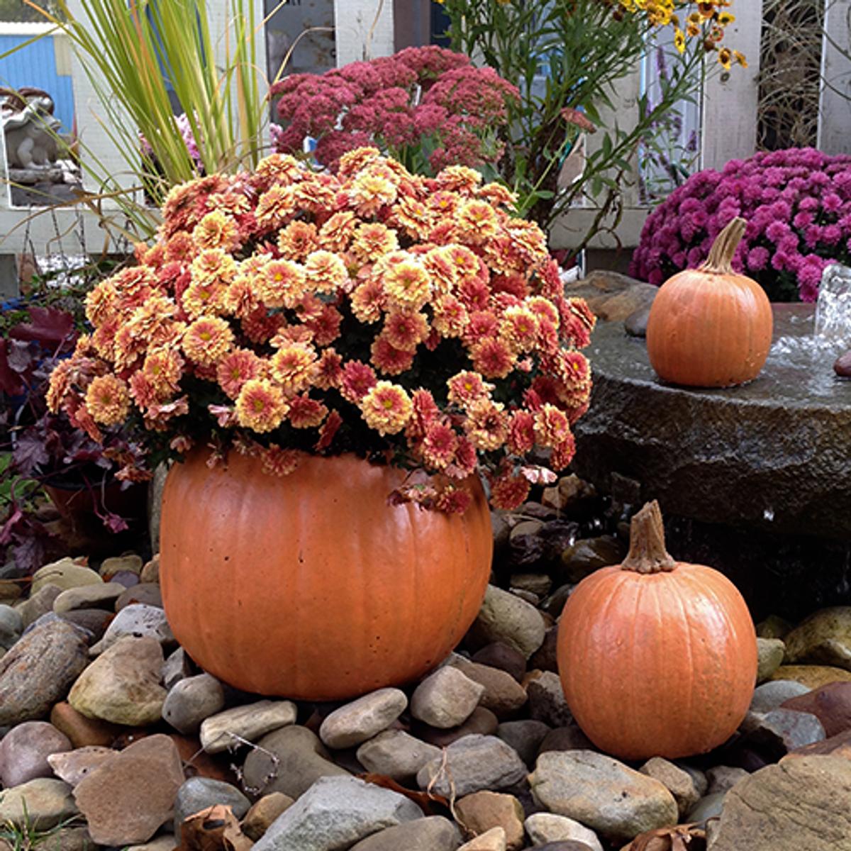Decorative, Cast Stone Pumpkin Planter Set of 3
