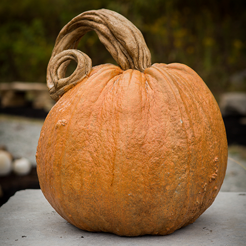 Stone Jack O'lantern Pumpkin