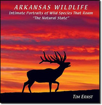 Arkansas Wildlife by Tim Ernst