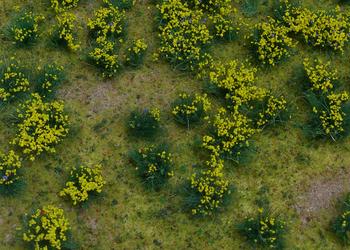 Flowering yellow meadow flax art design flowering yellow meadow mightylinksfo