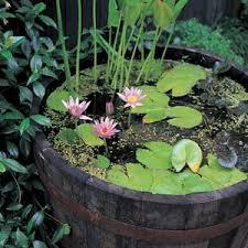 pond-10.jpg