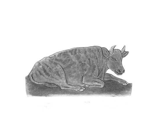 Natvity Reposing Cow