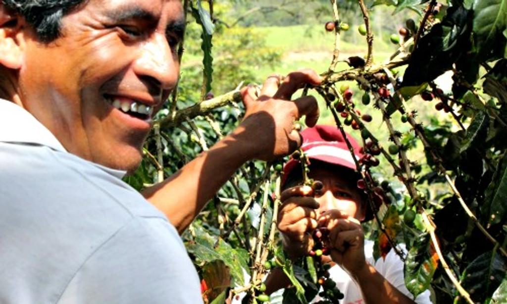 Peru - Fair Trade Oganic Coffee