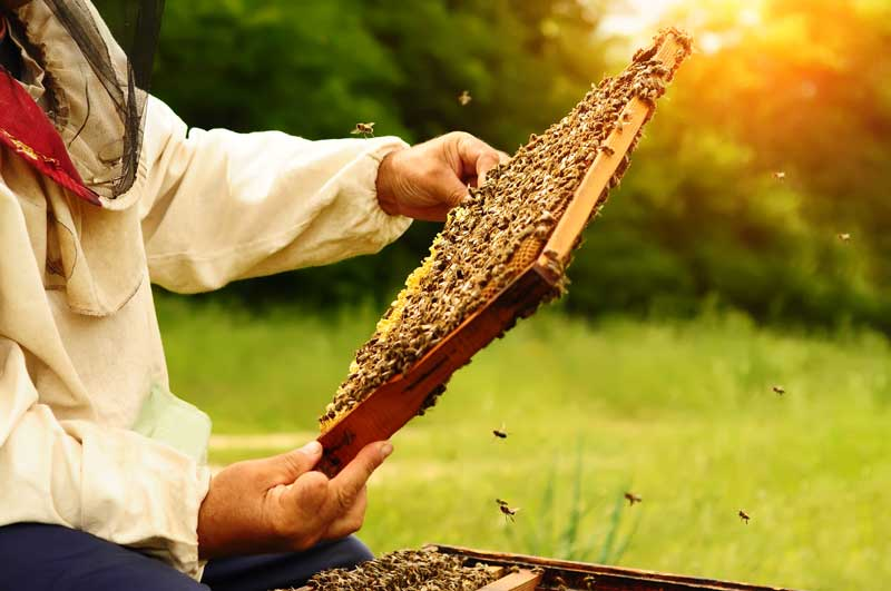 Bee keeper with honey comb