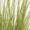 Closeup of Green/Yellow Onion Grass