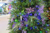 Close up of Dark Purple Ornaments, Lavender Accents, and Green Accents