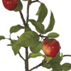 Red/Green Apples with Natural-looking Leaves